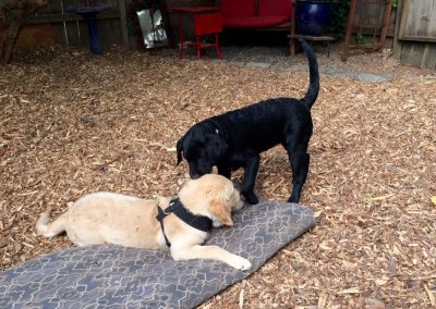 babalus-playhouse-doggy-daycare207