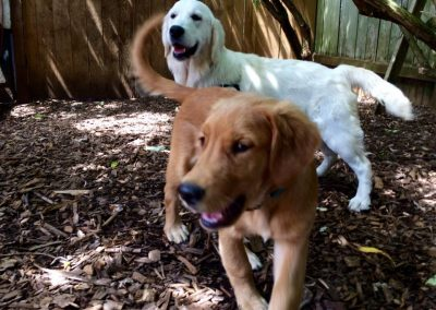 babalus-playhouse-doggy-daycare265