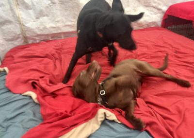 babalus-playhouse-doggy-daycare277