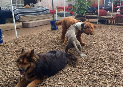 babalus-playhouse-doggy-daycare291