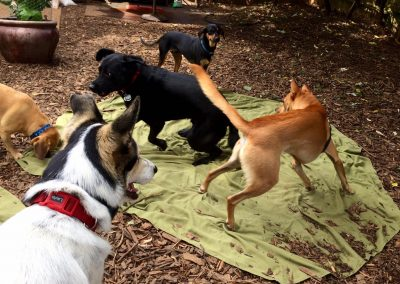 babalus-playhouse-doggy-daycare310