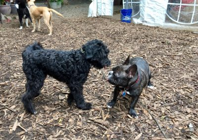 babalus-playhouse-doggy-daycare371