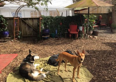 babalus-playhouse-doggy-daycare443