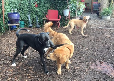 babalus-playhouse-doggy-daycare490