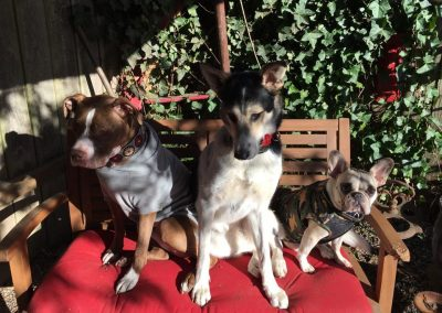 babalus-playhouse-doggy-daycare514