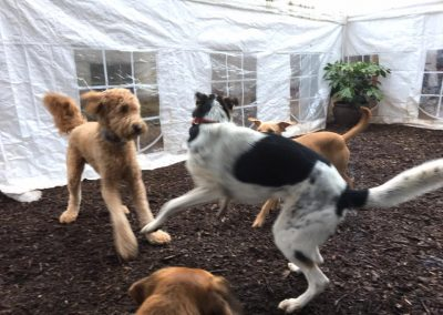babalus-playhouse-doggy-daycare539
