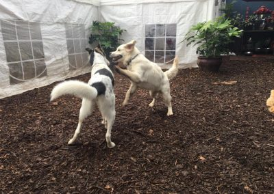 babalus-playhouse-doggy-daycare561