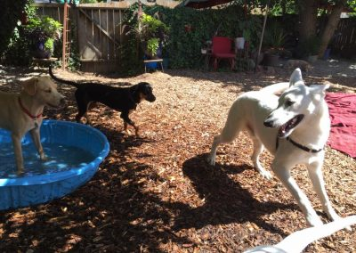 babalus-playhouse-doggy-daycare600