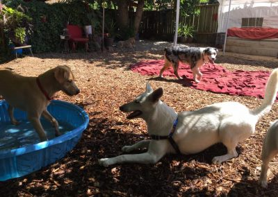 babalus-playhouse-doggy-daycare601
