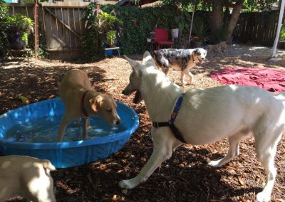 babalus-playhouse-doggy-daycare602