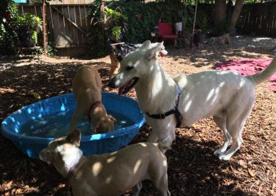 babalus-playhouse-doggy-daycare603
