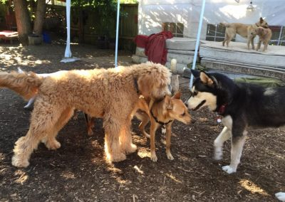 babalus-playhouse-doggy-daycare649