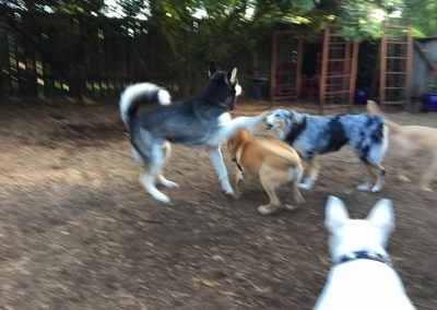babalus-playhouse-doggy-daycare665