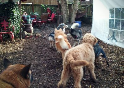 babalus-playhouse-doggy-daycare726