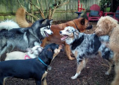 babalus-playhouse-doggy-daycare728