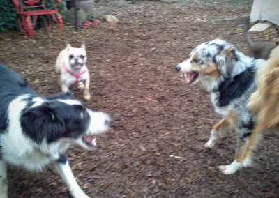 babalus-playhouse-doggy-daycare731