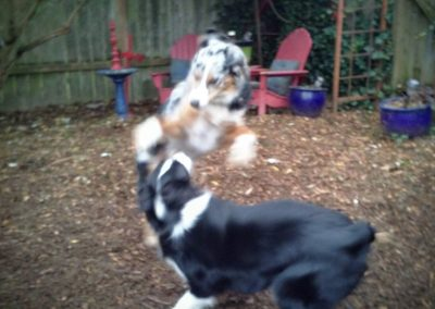 babalus-playhouse-doggy-daycare733