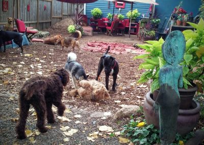 babalus-playhouse-doggy-daycare758