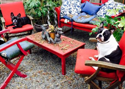 babalus-playhouse-doggy-daycare796