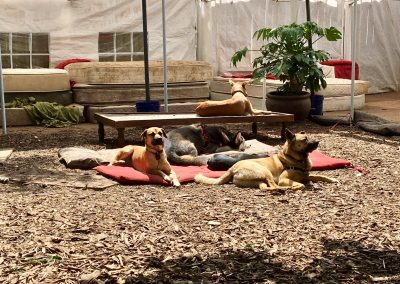 babalus-playhouse-doggy-daycare326