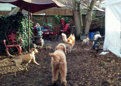 babalus-playhouse-doggy-daycare725